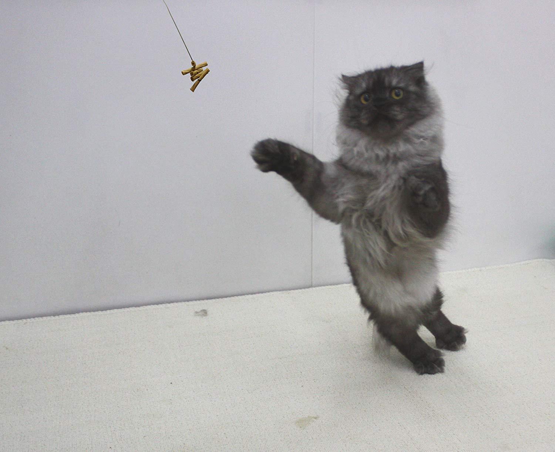 正版 美國 Cat Dancer 貓舞者 互動貓玩具 鋼絲逗貓棒
