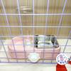 ☼ 宇宙兔兔 ☼ 兩用式 兔子 天竺鼠 龍貓 貓 狗 小動物 固定式水碗 飼料碗 籠子網片適用 水壺 食物盆