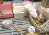 ☼ 宇宙兔兔 ☼ 牧草架 兔子 天竺鼠 龍貓 小動物 固定式草架 籠子網片適用 草盆 食物盆 大草架