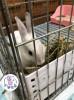 ☼ 宇宙兔兔 ☼ 牧草架 兔子 天竺鼠 龍貓 小動物 固定式草架 籠子網片適用 草盆 食物盆 小草架